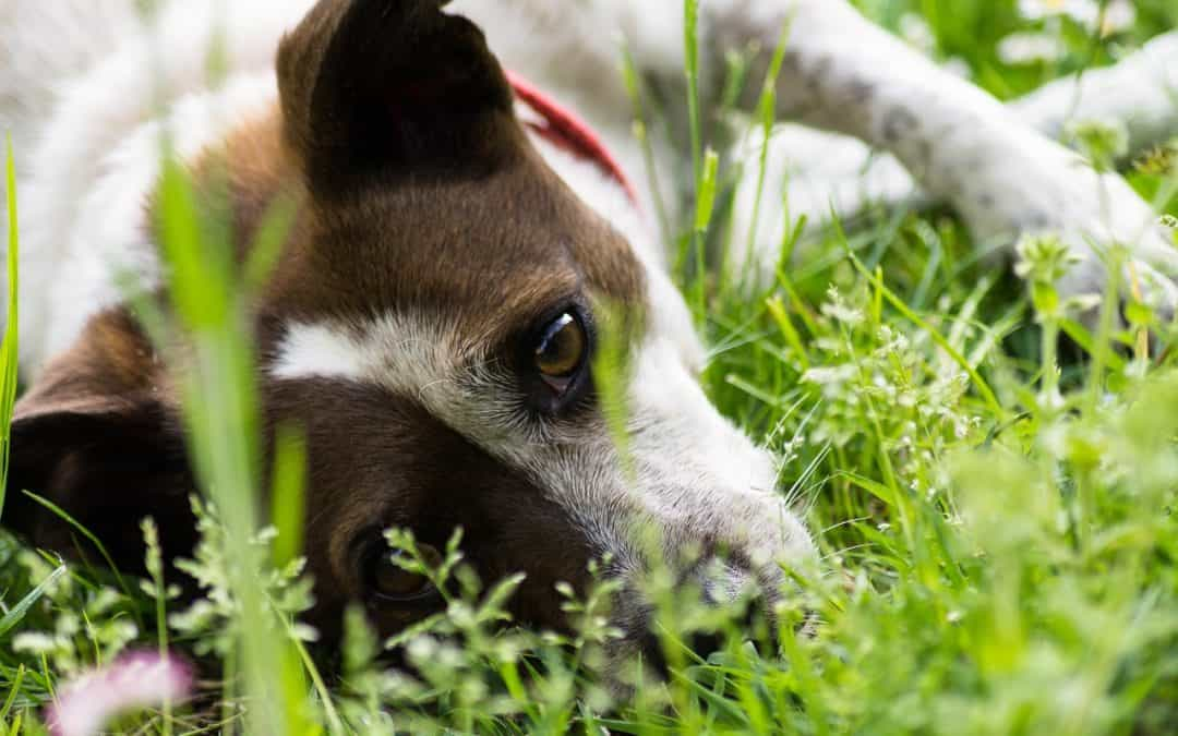 Does Your Pet Have Allergies? Look For These Symptoms